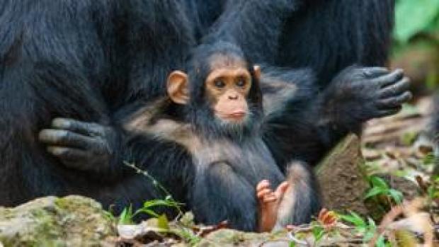 A monkey relaxing