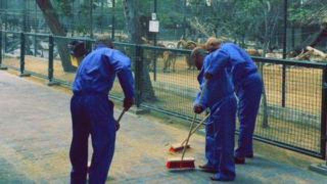 A picture released by Dubai's government showed three men in blue overalls cleaning the zoo as a punishment for feeding a cat to hungry dogs (15 March 2017)