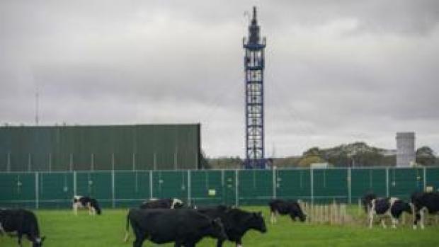 Cattle graze next to the Preston New Road drill site