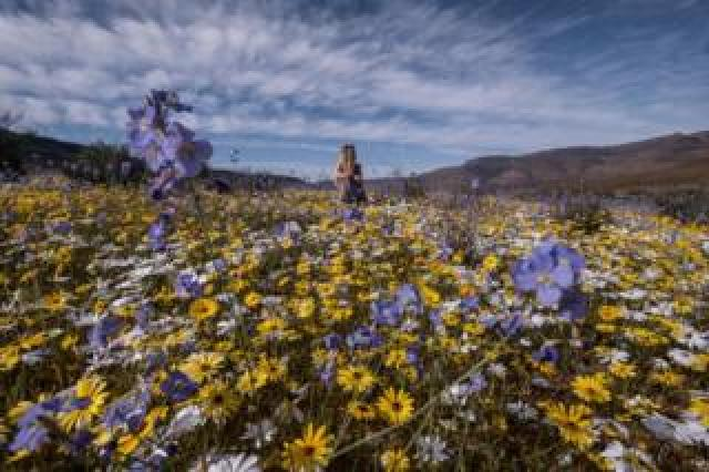 A woman surrounded by flowers in the desert