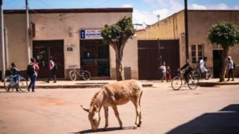 A donkey on a street with several bicycles in Asmara, Eritrea