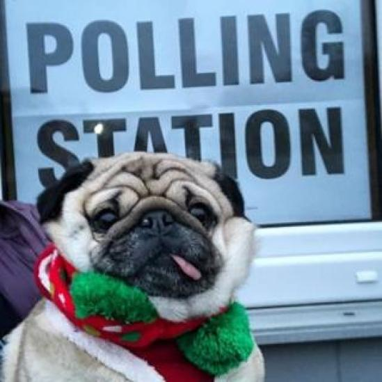 Alfie the pub says 'job done' at a polling station in Cheshire
