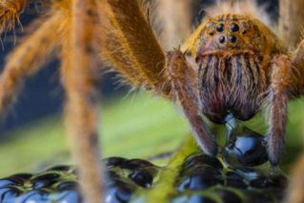 Spider image by Jaime Culebras