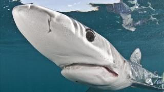 A shark seen in a close up image