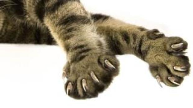 Cat claws