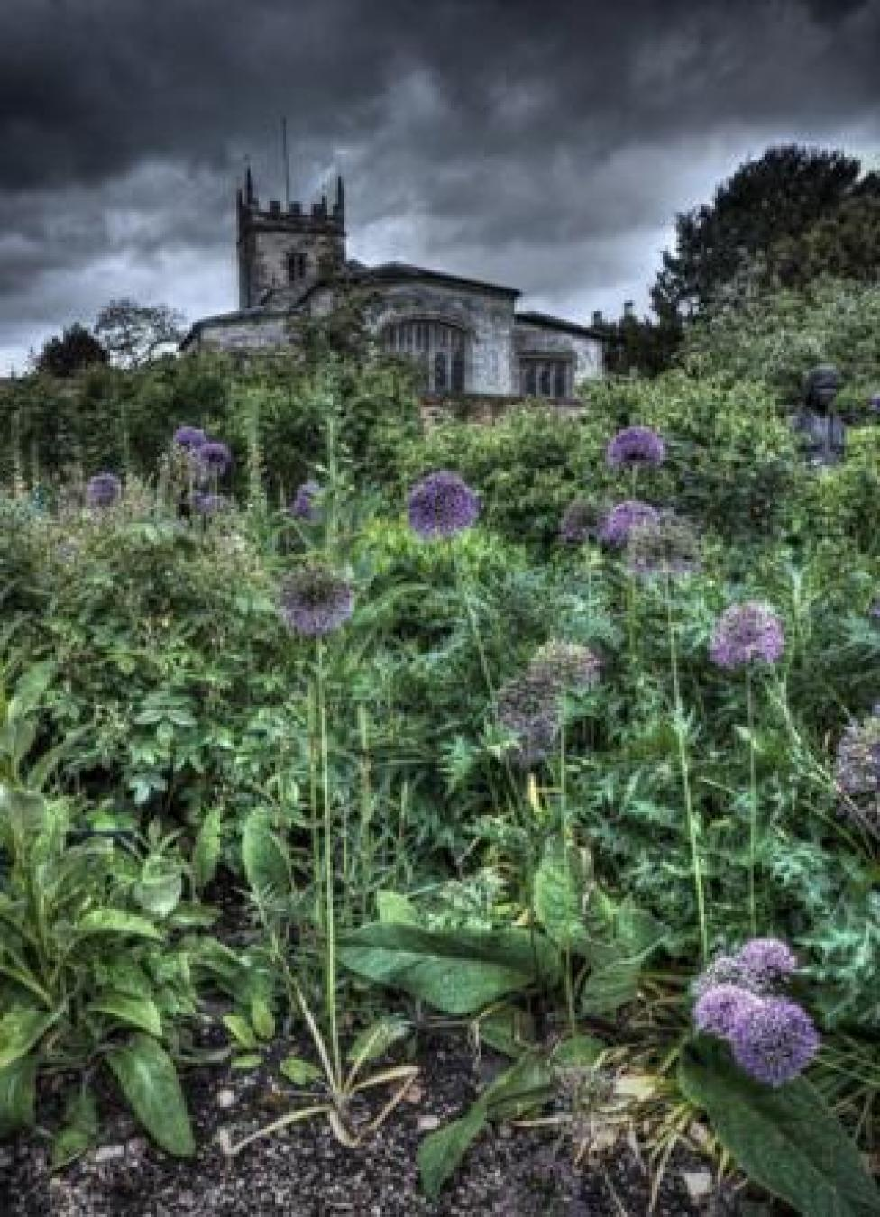 Wild flowers and weeds with a church in the background