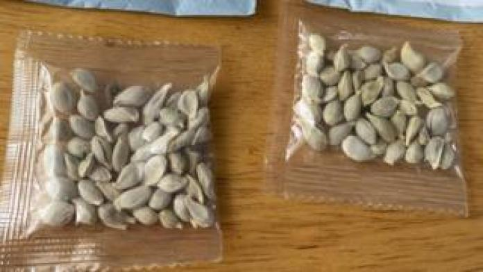 Packages of unidentified seeds which appear to have been mailed from China to U.S. postal addresses are seen at the Washington State Department of Agriculture (WSDA) in Olympia, Washington (July 24, 2020)
