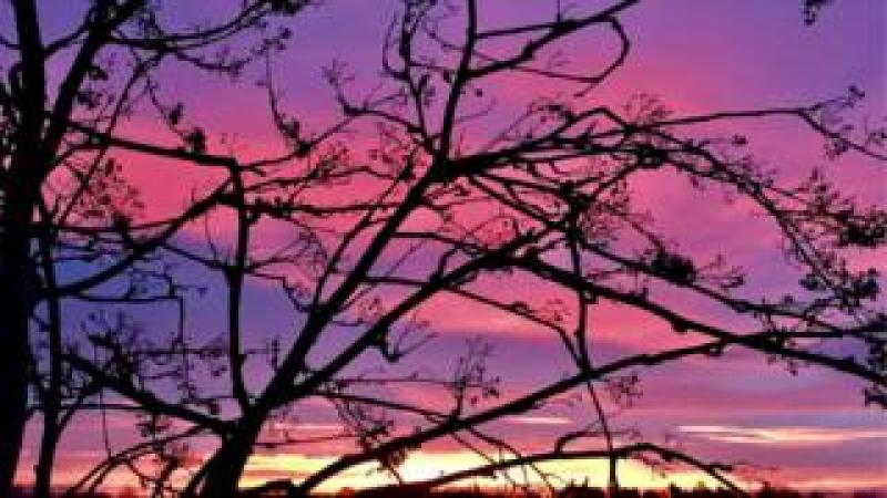 A photo of the purple sky in Coventry through tree branches