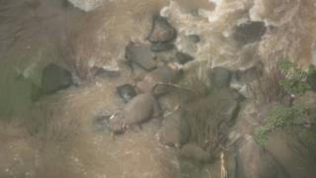 An image of the elephants found at the waterfall