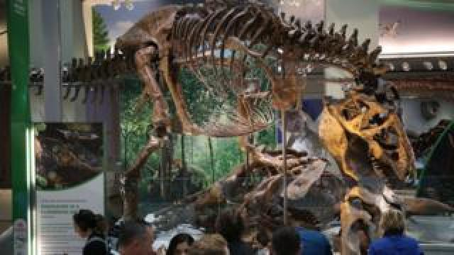 Tyrannosaurus Rex on display at Smithsonian June 2019