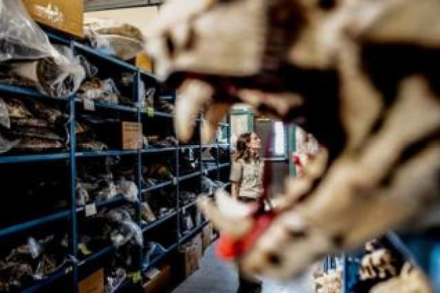 Sarah Metzer framed by a tiger's mouth while in front of many turtle shells on a shelving unit