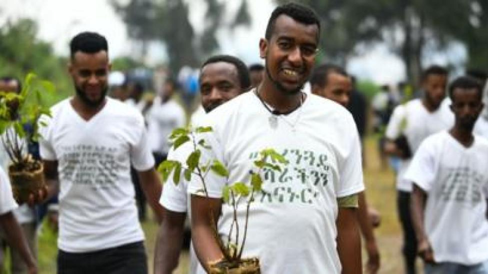 Addis tree planter