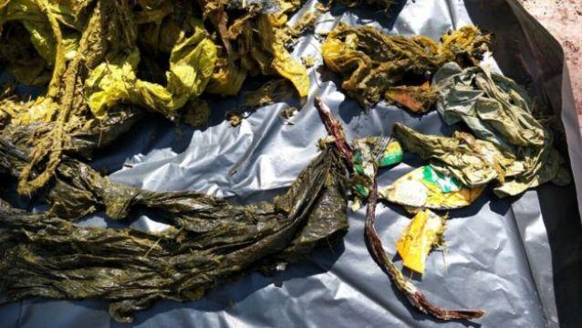 Lixo encontrado dentro do estômago de veado