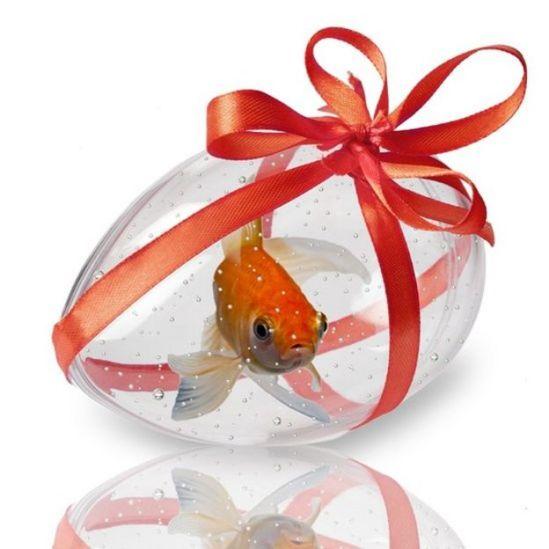 Peixe em aquário de plástico transparente