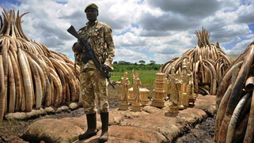 Soldado em meio a presas de elefante apreendidas no Quênia