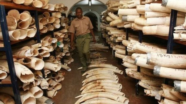 A room where elephant tusks and rhino horns are kept in Harare