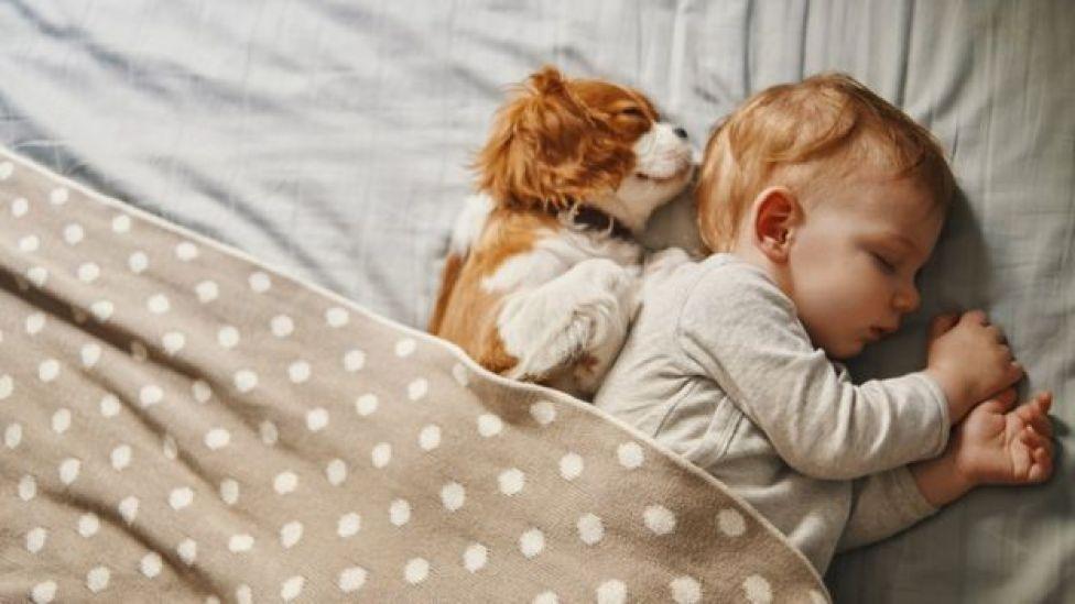 Un perro durmiendo al lado de un bebé.