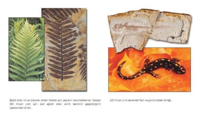 """harunyahya.org'da yayımlanan ve """"Yaratılış Atlası""""ndan bir örnek"""