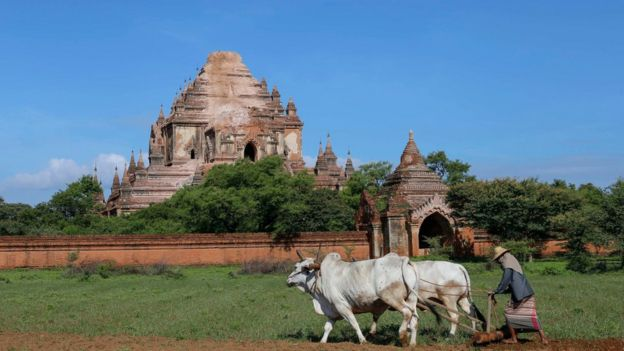 A woman farms in a field in front of the Sulamani Guphaya temple, which was damaged after a strong earthquake hit Bagan, Myanmar, 25 August 2016.