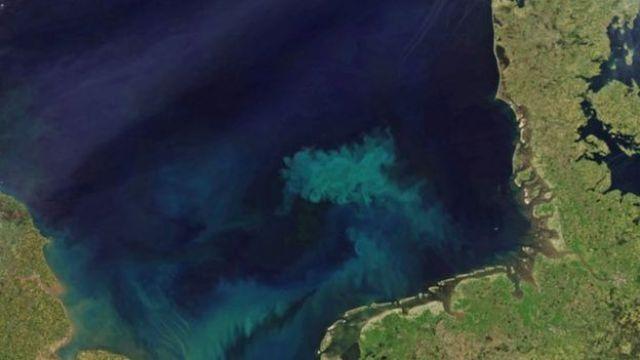 Imagem mostra mar esverdeado próximo à mata