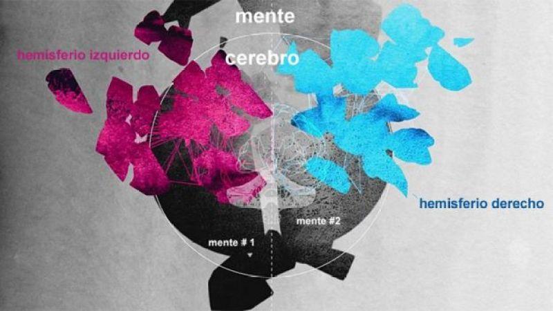 Ilustración de la idea de que hay múltiples cerebros