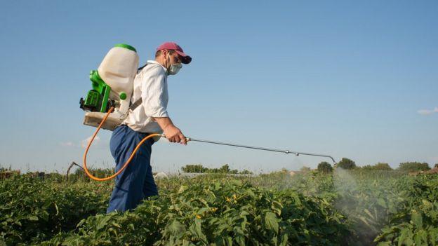 Homem borrifando vegetais em horta