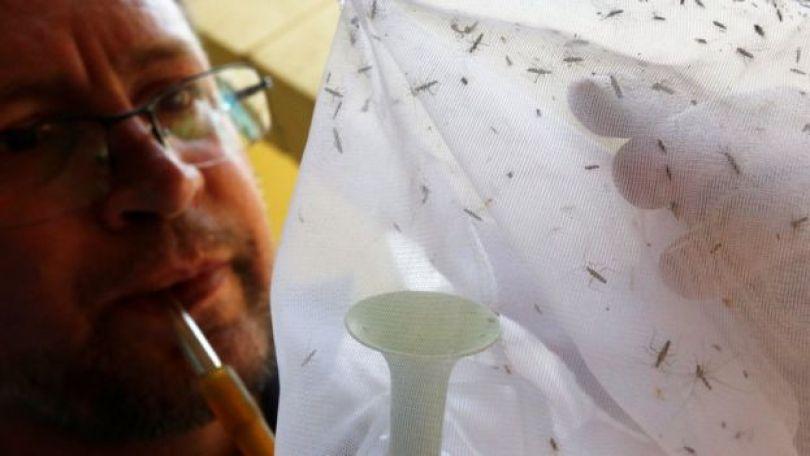 Agente examina mosquitos no parque Anhanguera, em São Paulo