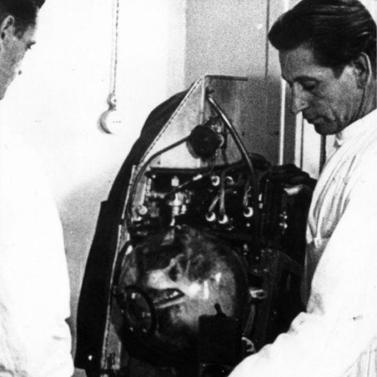 Laika dentro da cápsula do satélite