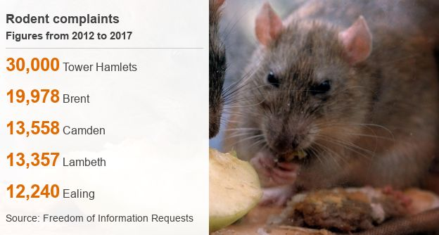 Rodent data picture