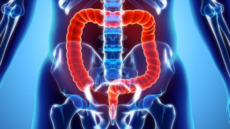 Ilustración de los intestinos y colon