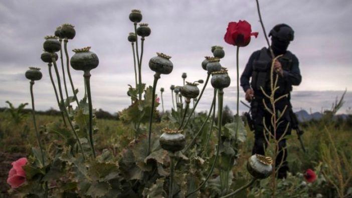 Cultivos de amapola y marihuana en México