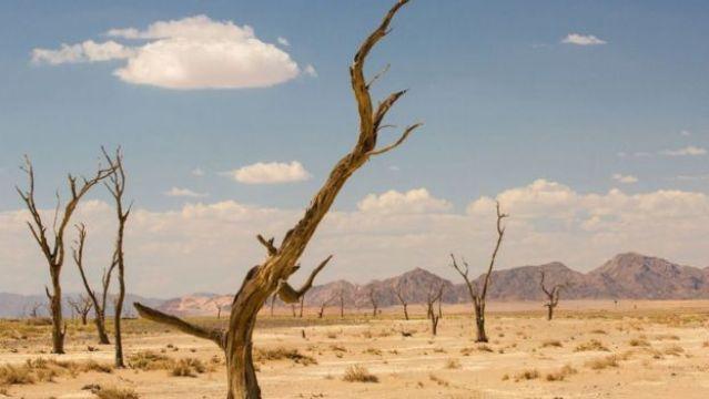 Árvores secas no deserto