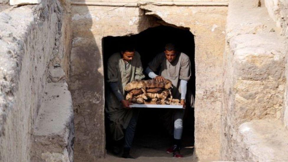 Trabajadores sacan los gatos momificados de la tumba.