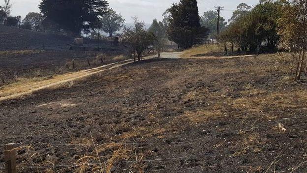 アデレードヒルズでの山火事の後、ティルブルックエステートの黒ずんだ土地。