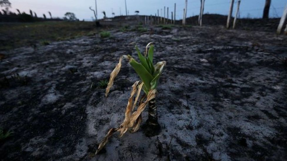 Land burned in the Amazon