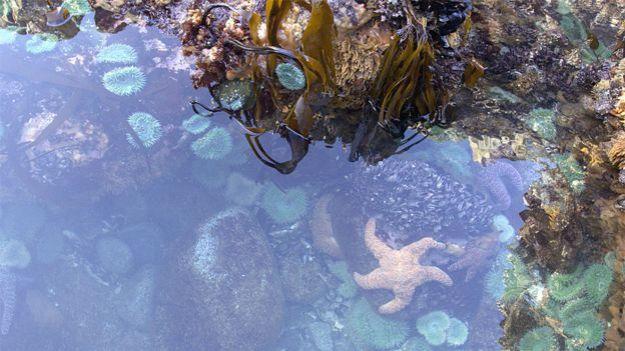 Poza de marea