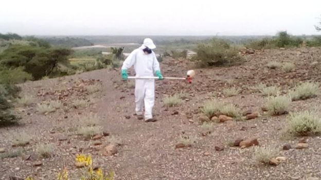 Man spraying area with locusts