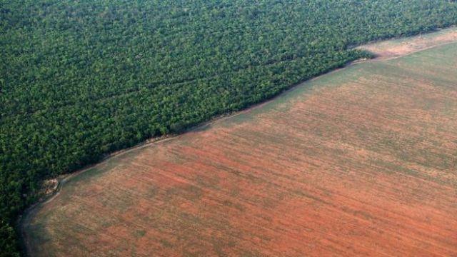 Floresta Amazônica margeada por terreno desmatado para plantio de soja no MT