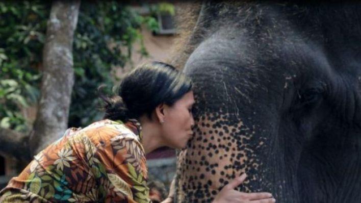 الفيل حيوان عاطفي شديد الذكاء