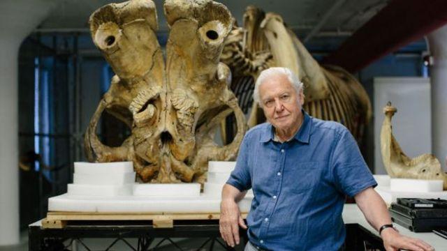 David Attenborough em frente ao crânio de Jumbo