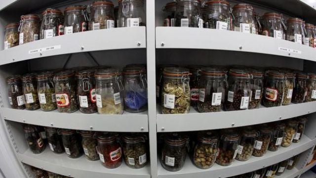 Sementes dentro de frascos com rótulos nas prateleiras