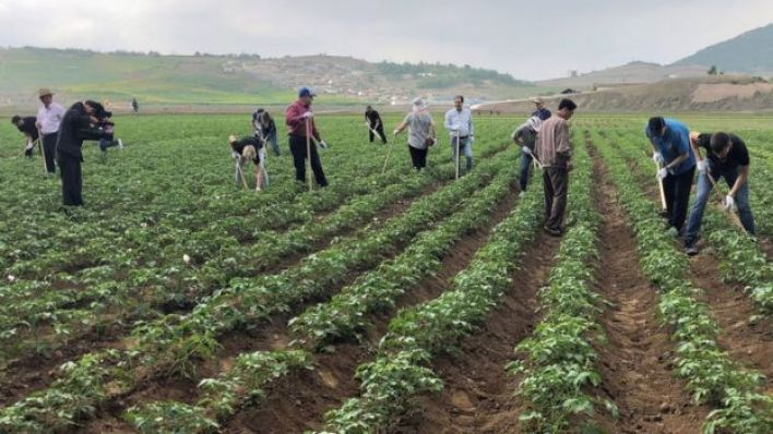 tarım