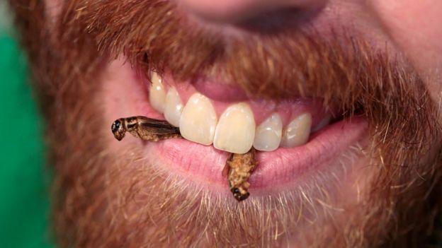 homem comendo insetos