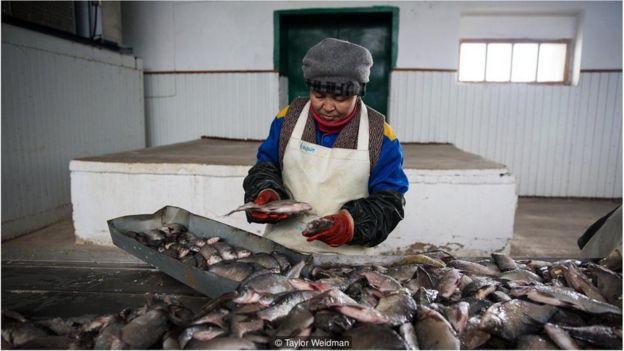 Operária em fábrica de processamento de peixes em Aralsk
