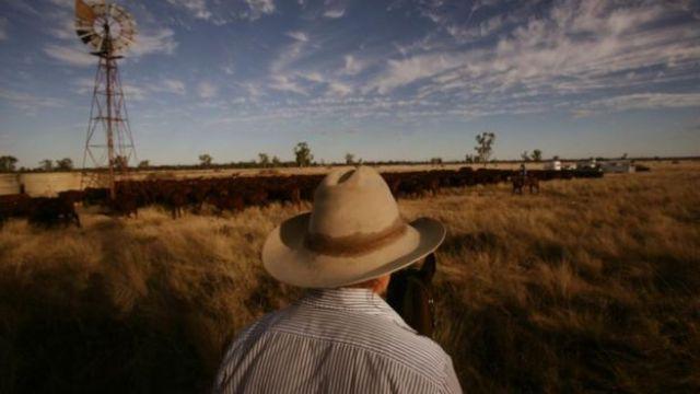 A digestão do gado libera gás metano, mas uma mudança na dieta do animal pode reduzir seu impacto ambiental