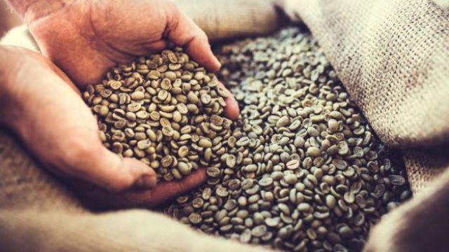 Grãos verdes de café