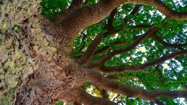 Copa de árvore vista de baixo