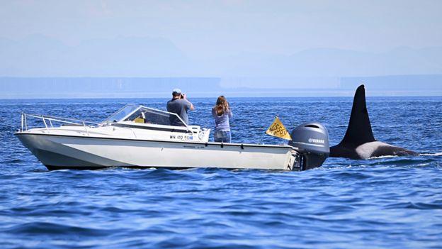 Miembros del Centro para Investigación de Cetáceos abordo de una lancha.