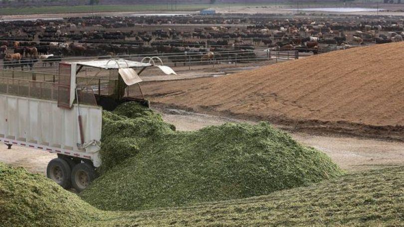 Rancho de gado da JBS nos EUA