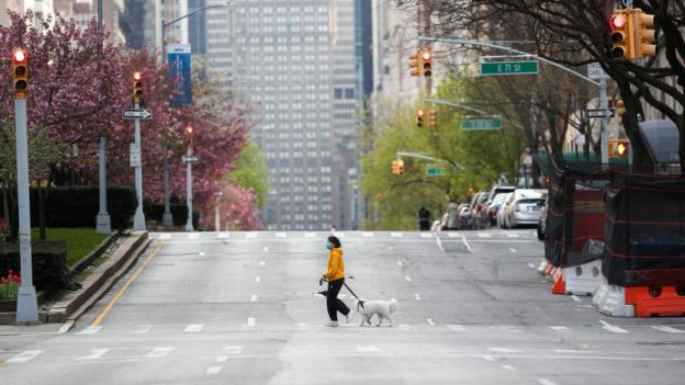 A woman, with a face mask, crosses a street with her dog on Park Avenue, remaining nearly empty due to coronavirus